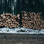 Bighorn Logging Corp. v. Truck Ins. Exchange